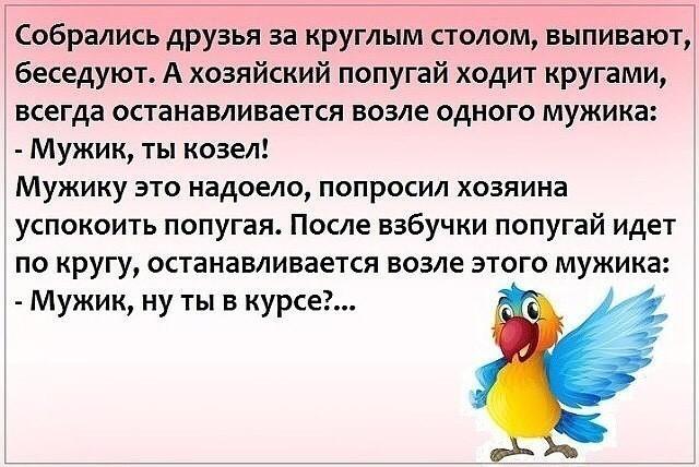 Анекдот Про Попугая Расскажи