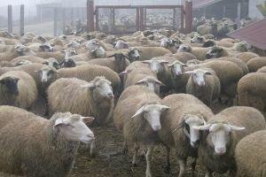 В Литве узаконят ритуальный забой скота из-за эмбарго России