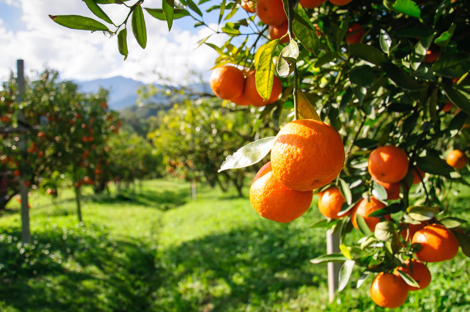 покровы фрукты растут на деревьях картинки вещи купишь почте