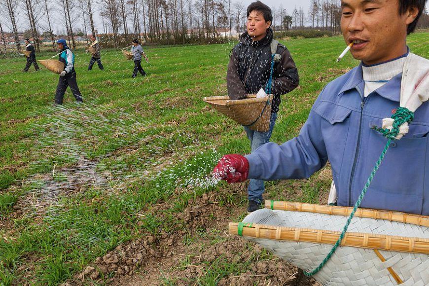 Новый виток скандалов вокруг сибирской тайги: Китайцам отдали в аренду 2 млн га леса в Томской ...