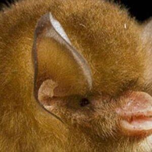 Млекопитающие (Mammalia) — класс позвоночных животных, основными отличительными особенностями ...
