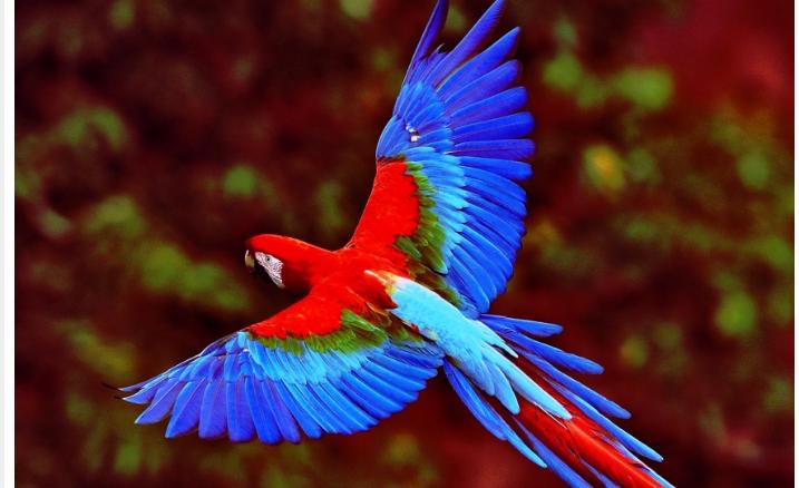 Попугай летел за электричкой, победил обстоятельства и нашел хозяина Источник: https://zelv....