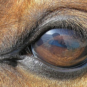 Лошади обязательно припомнят, в каком настроении с ними общались в прошлый раз