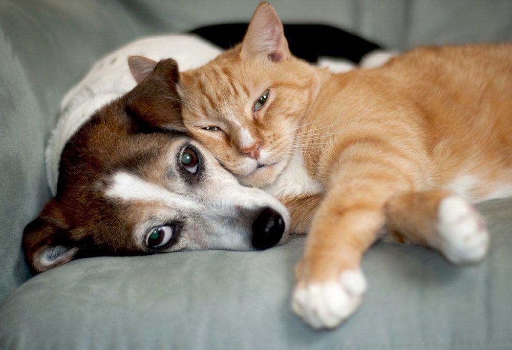 сегодняшний картинки собак из кошками религия позволяет, тоже