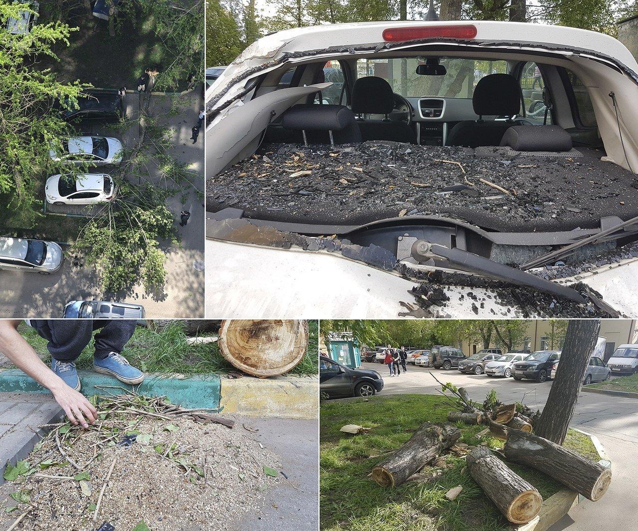 Как получить деньги, если на автомобиль упало дерево.
