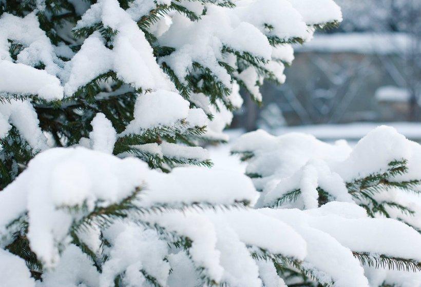Милонов попросил Деда Мороза повысить налог на срубленные ели