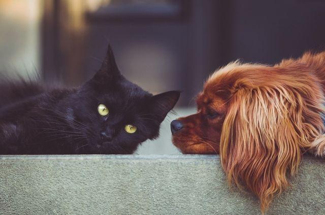 Закон о животных: что нужно знать владельцам