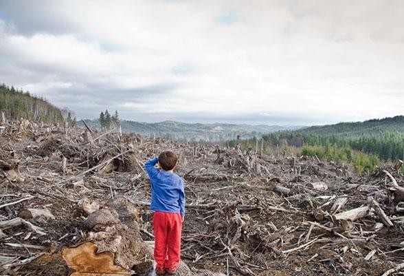 Как законно уничтожить 5 тыс. га леса в городе: пример из практики