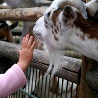 Разработано положение о лицензировании деятельности по использованию животных в зоопарках