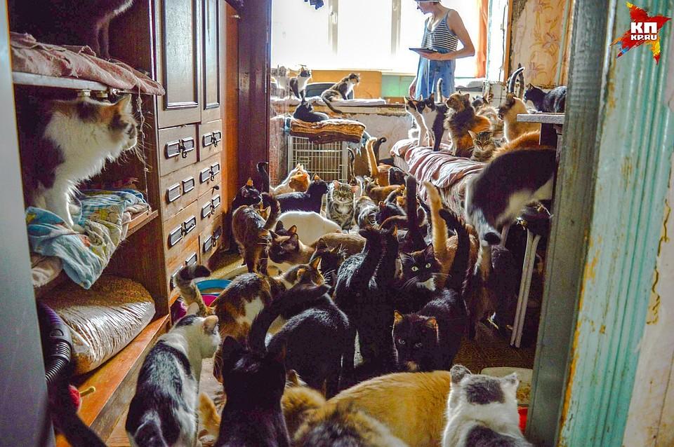 Сколько кошек можно законно содержать в квартире. Методика расчета.