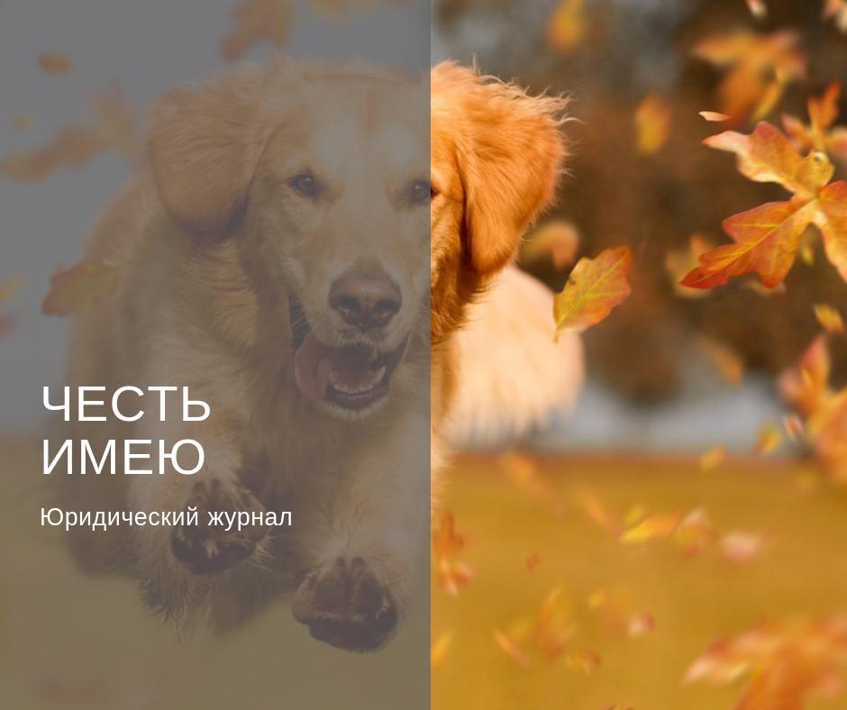 Правила выгула собак (Международные и РФ)
