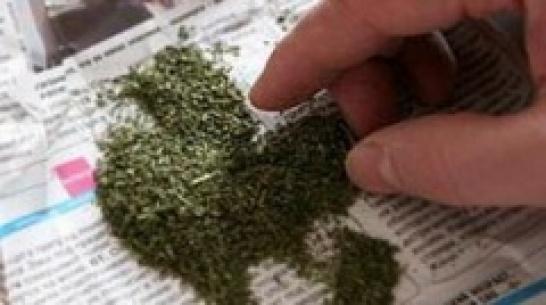 У жителя Лужского района нашли автомат Калашникова и плантацию марихуаны