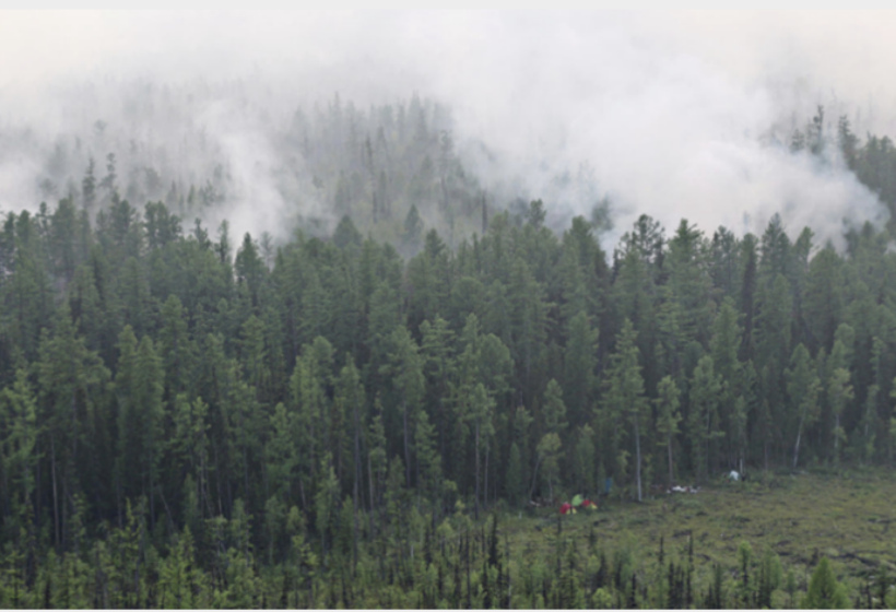 Названа причина распространения пожаров в Сибири
