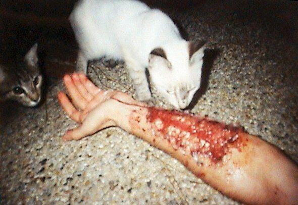 Стаи бродячих кошек нападают на людей в Наукограде