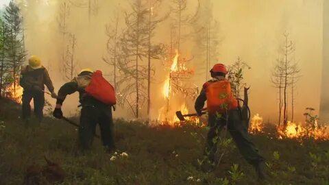 Возбудили первое уголовное дело из-за пожаров в Сибири