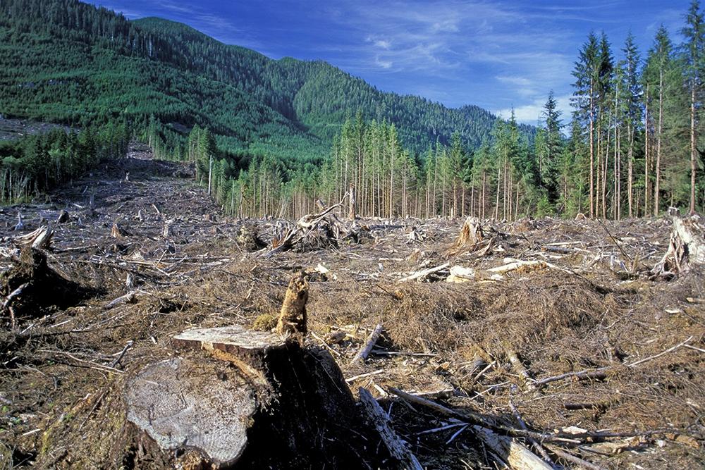 Председатель Госдумы Вячеслав Володин призвал вырубать лес в просеках