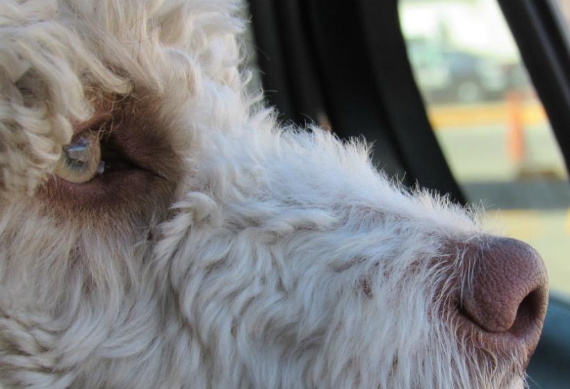 Что нужно знать, собираясь в дорогу с животным?