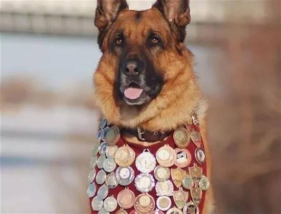 Единственная собака в мире, получающая пенсию