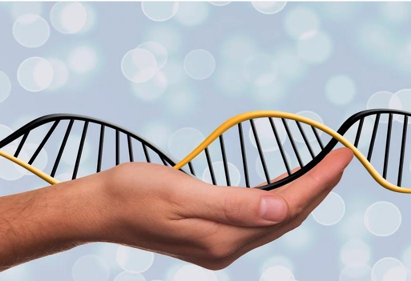 Порядок назначения генетической экспертизы по делам об установлении отцовства