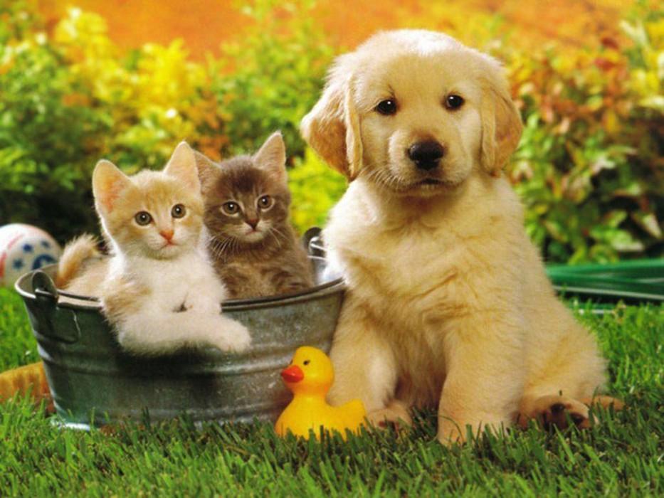 В России вводят новые правила содержания домашних животных