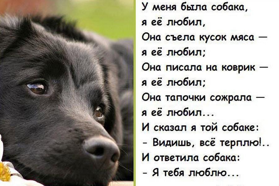 утонченный стихи для собаки любимой готовить пить раствор