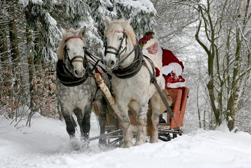 В Казани выписали 6 штрафов после поездки «Деда Мороза» в запряженных «Мерседесом» санях