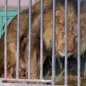 Владельцев бродячих зоопарков заставят содержать своих подопечных на пенсии