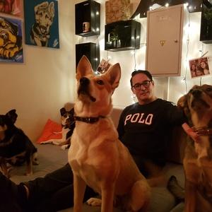Шведский бизнесмен восхитился работой пёсокафе в Новосибирске