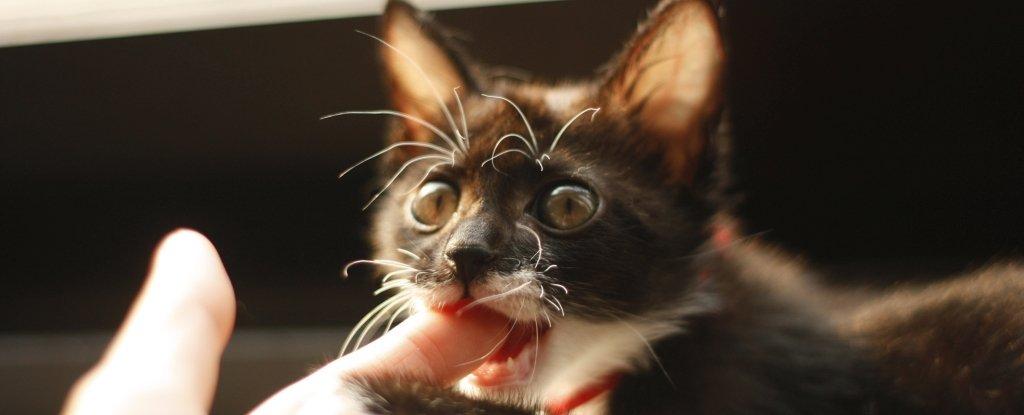 Коты охотно пожирают человечину