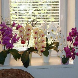 Как заставить орхидею цвести?