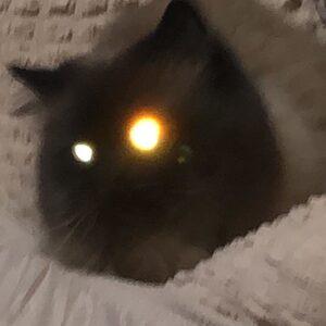 Кот, знахарка и гранатовый браслет, часть 1. ( откровенный репост, но очень стоит прочитать)