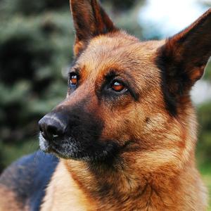 Россиянин получил тюремный срок за убийство собаки