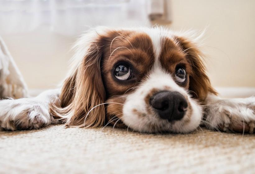 В Якутске могут ввести налог на собак