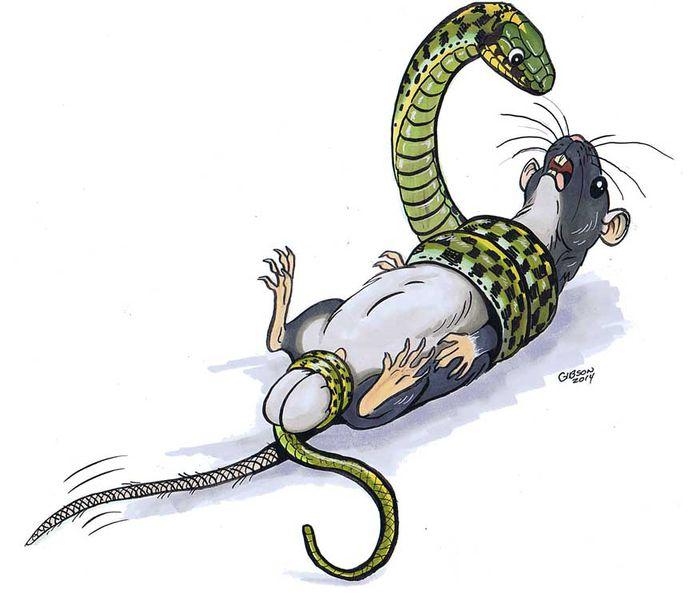 Две змеи картинки прикольные